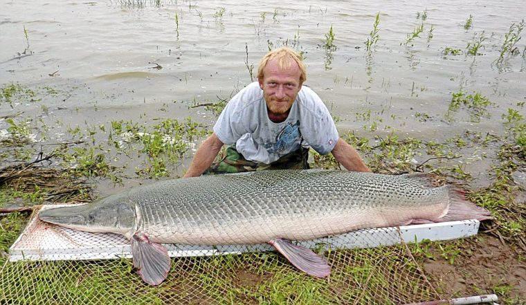 Eight-Foot-Long Gator Gar is Largest Fish Caught in Oklahoma History