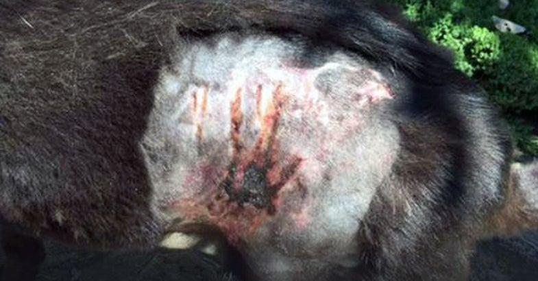 Dog Survives Bear Attack in Virginia