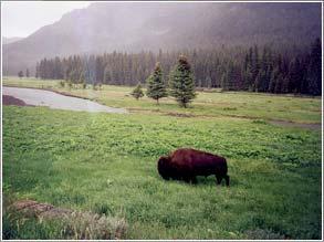 Great American Hunters: Daniel Boone