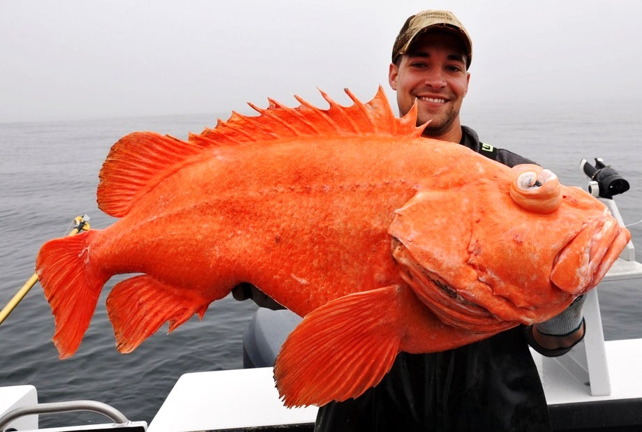 IGFA Catches: All-Tackle, Line-Class, Length, and Junior Record Fish from August 2013