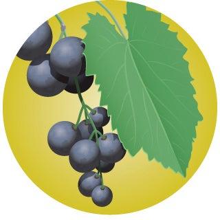 whitetail food alternative grape