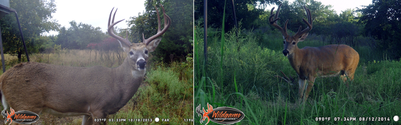 Improved Conditions Put Bucks in Good Shape
