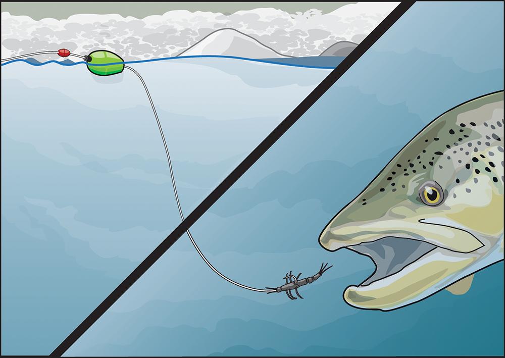 Trout diving for soft bait illustration