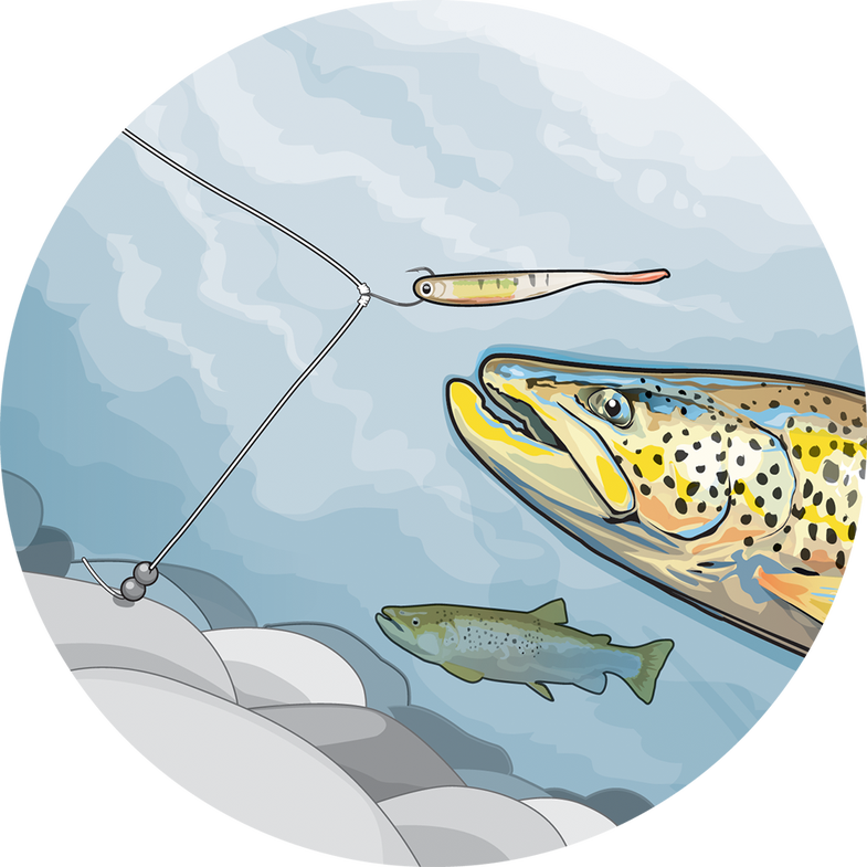 Trout going for soft bait illustration