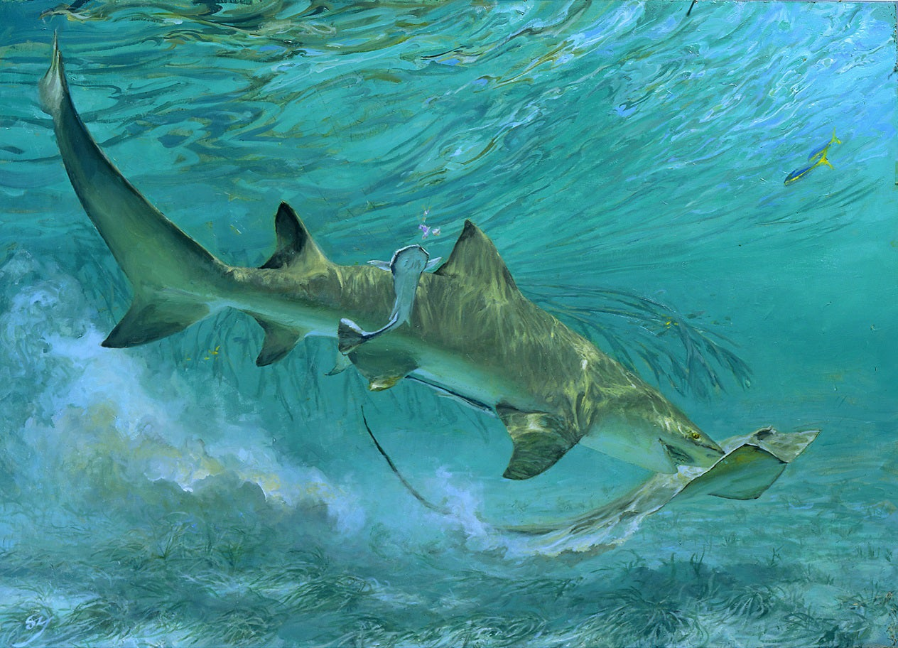SHARK!: A Preview of an Artistic Tribute To The Ancient Apex Predators of the Deep