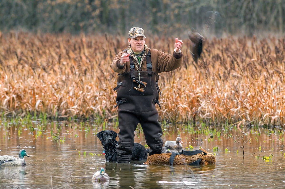 Duck Paradise: The Fowl Feedlot