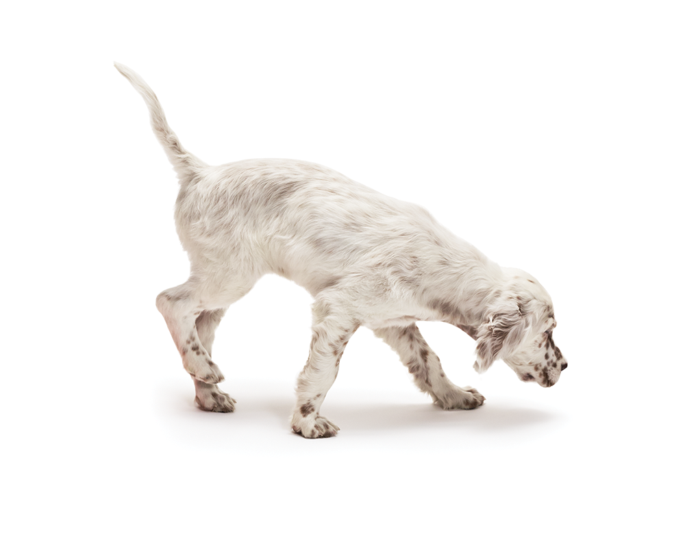 dog training, heel, commands, command