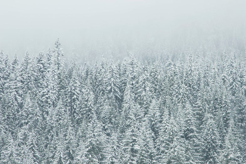 A Hunter's Guide to Winter Survival