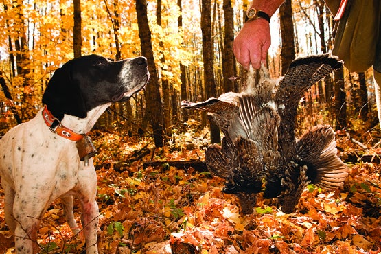 An Inside Look at a Wisconsin Grouse Hunting Camp