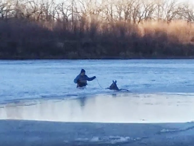 Video: Deer Stuck in Frozen River Saved in Bold Rescue