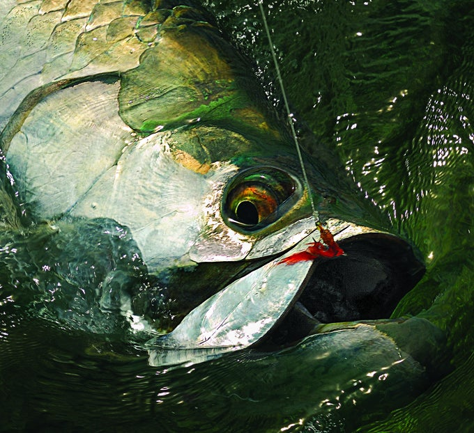 Striking Silver: How to Hook a Tarpon