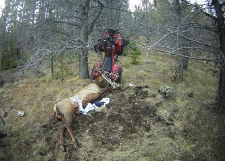 news, elk impaled