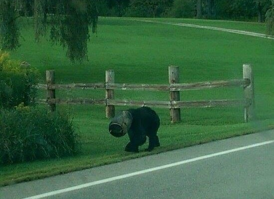 Video: Volunteers Wrestle and Free Black Bear With Bucket Stuck on Its Head
