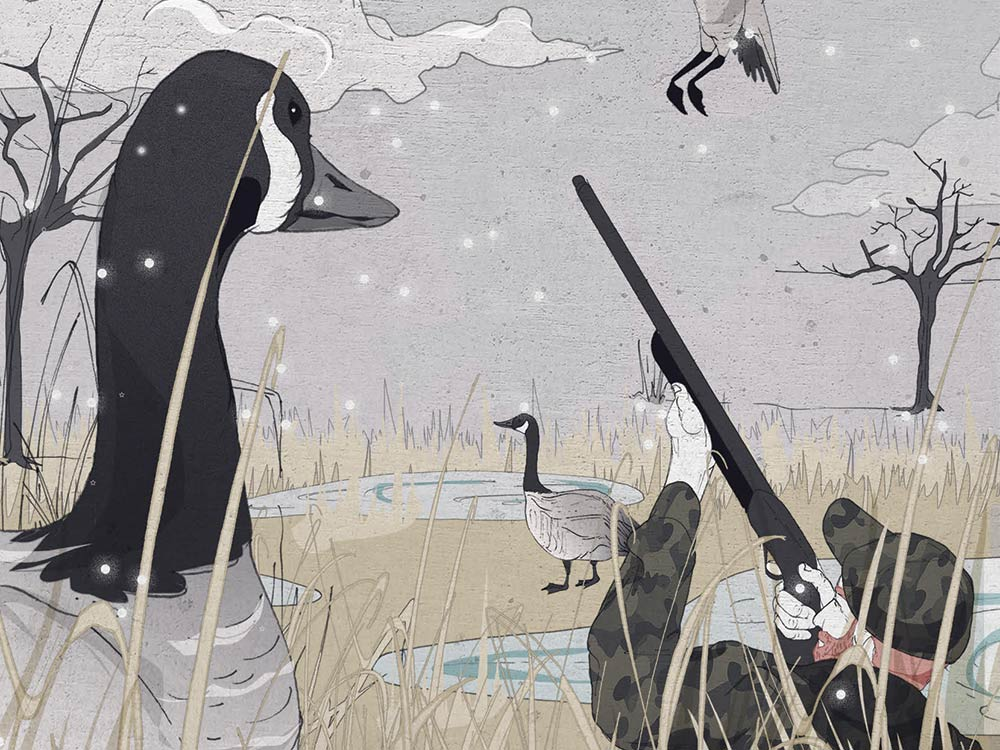Canada geese hunting illustration