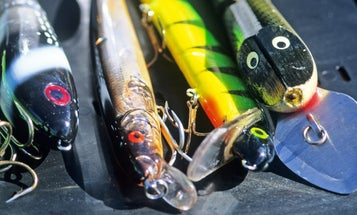 Study Finds Bait, Tackle Stores Generate $2.3 Billion for Economy