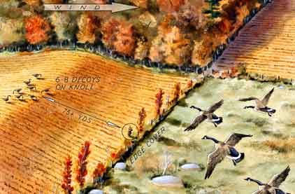 How to ambush geese in a field