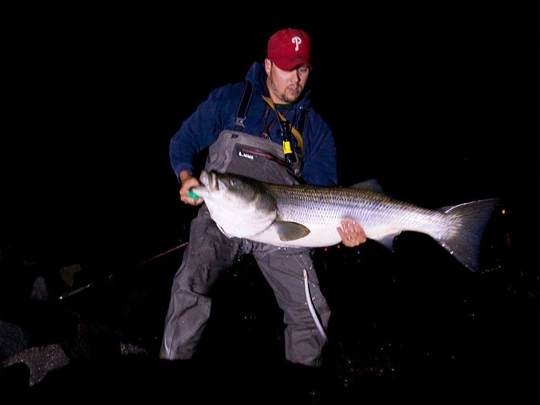 fisherman holding striped bass