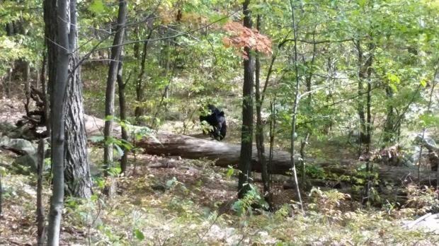NJ Hiker Snapped Photos of the Black Bear That Killed Him