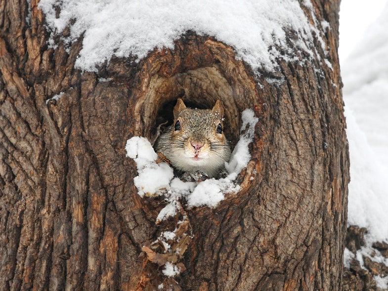 squirrel rut