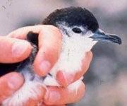 New Bird Species Found in Smithsonian Drawer, May Be Extinct