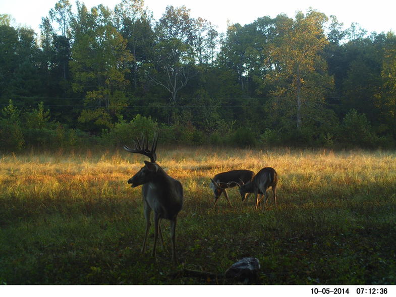 A Sharp Increase in Buck Sign and Movement