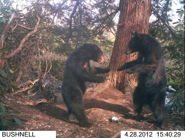 The 35 Best Photos From Field & Stream's 2012 Spring Trail Cam Contest: Round II