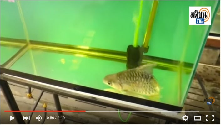 Freaky Half Fish Survives Six Months