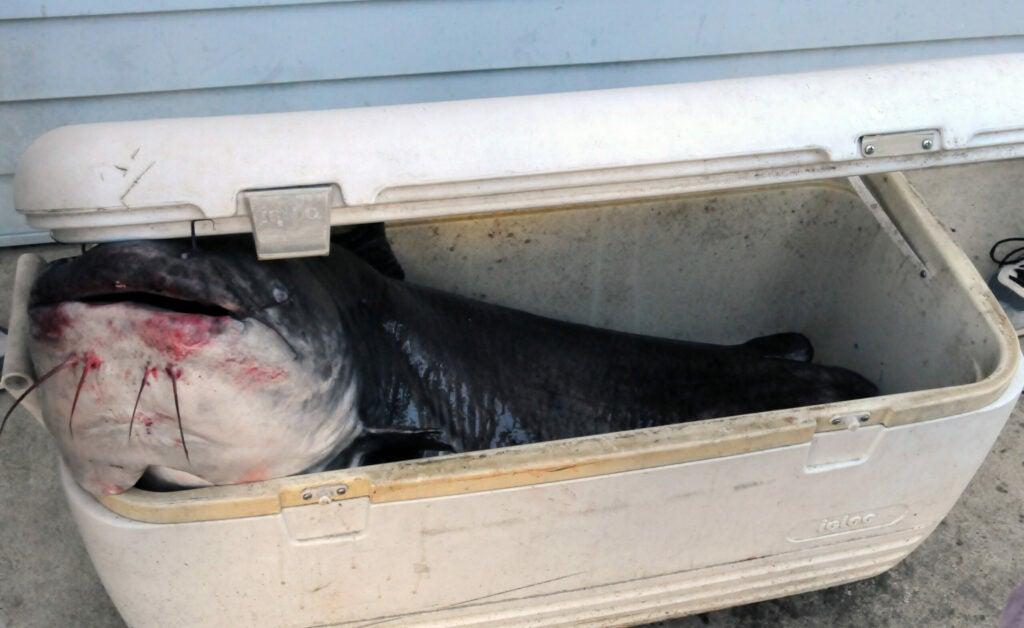 httpswww.fieldandstream.comsitesfieldandstream.comfilesimport2014importImage2009photo18Record_Fish_Pics_5_Cooler.jpg