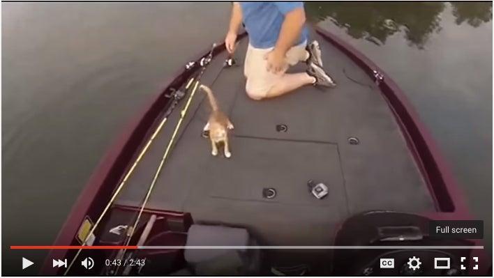 The Warrior River Kitten Blitz