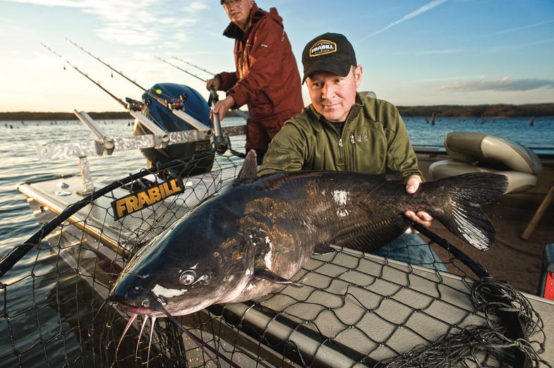 fisherman with large catfish in net
