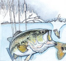 How to Choose the Best Lure to Catch Bass in Any Pond