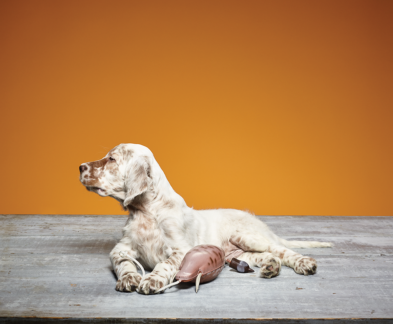 Teach Your Gun Dog the Kennel and Place Commands