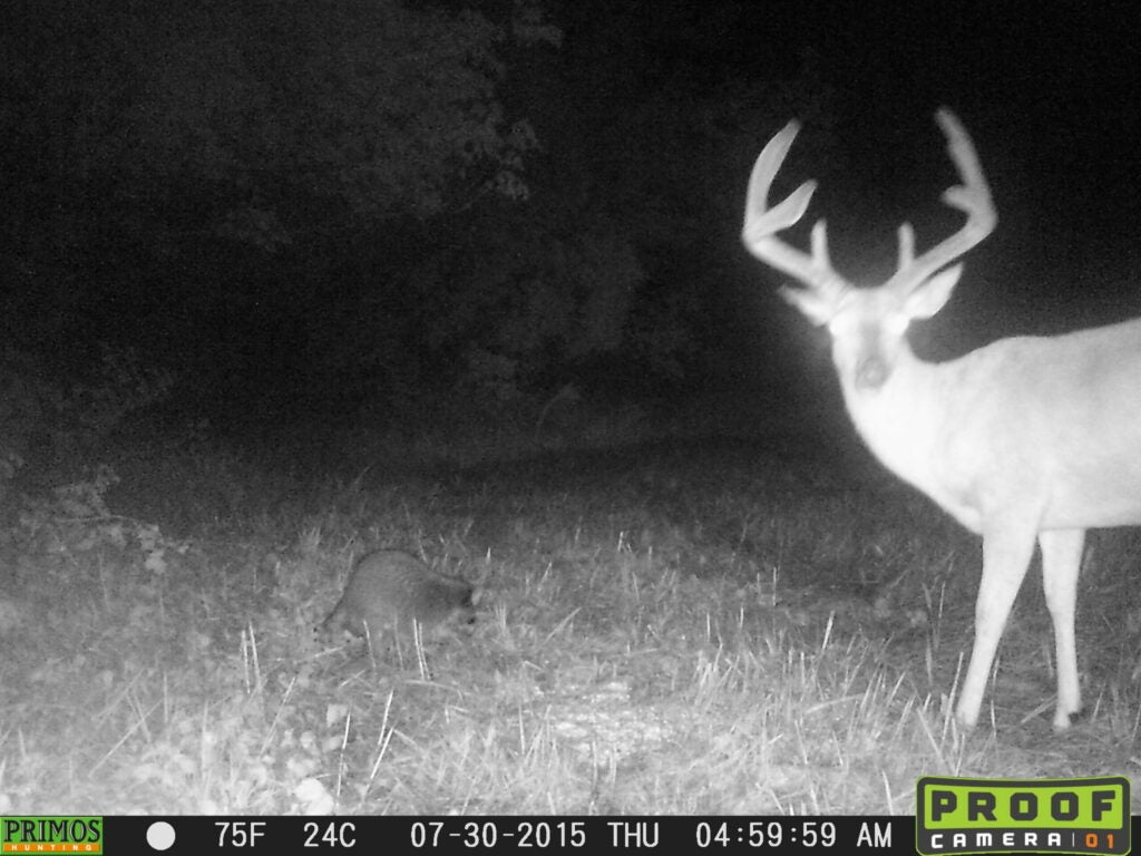 8-point buck in velvet