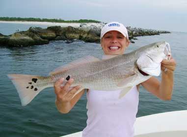 An Apalachicola, FL redfish.