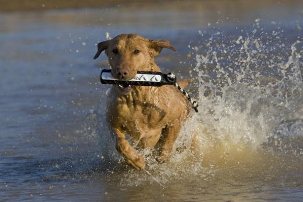 How to Get Your Dog in Hunting Shape During the Off-Season