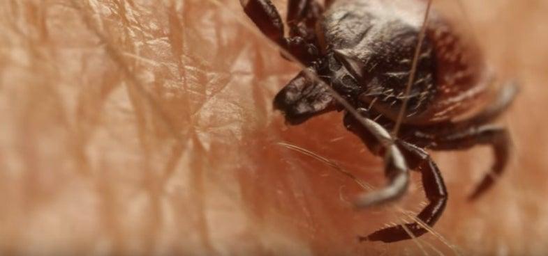 black legged tick, california, lyme disease
