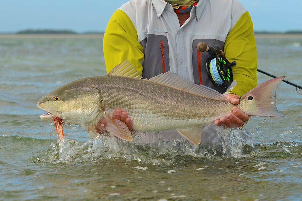 Quick Tip for Redfish: Cast Inside the Box