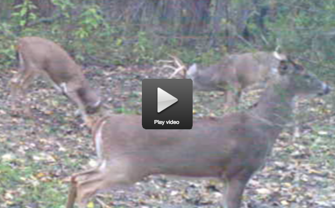 Hunters Are Seeing Plenty of Sign, But Not Many of the Bucks That Made It