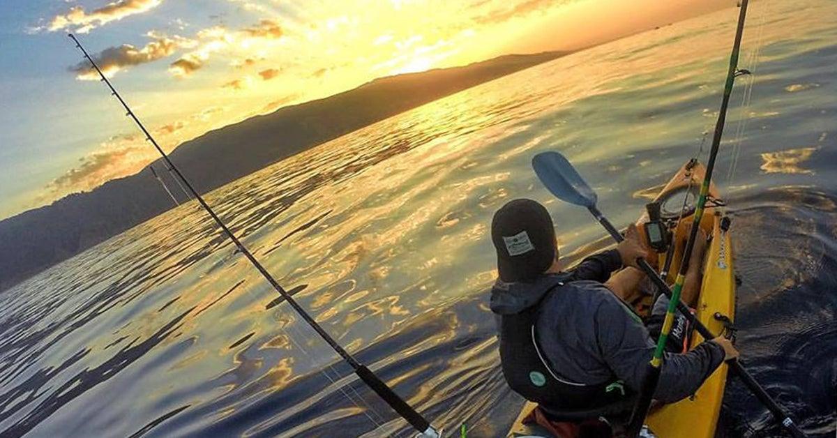 Hammerhead Attacks Kayak Fisherman in California