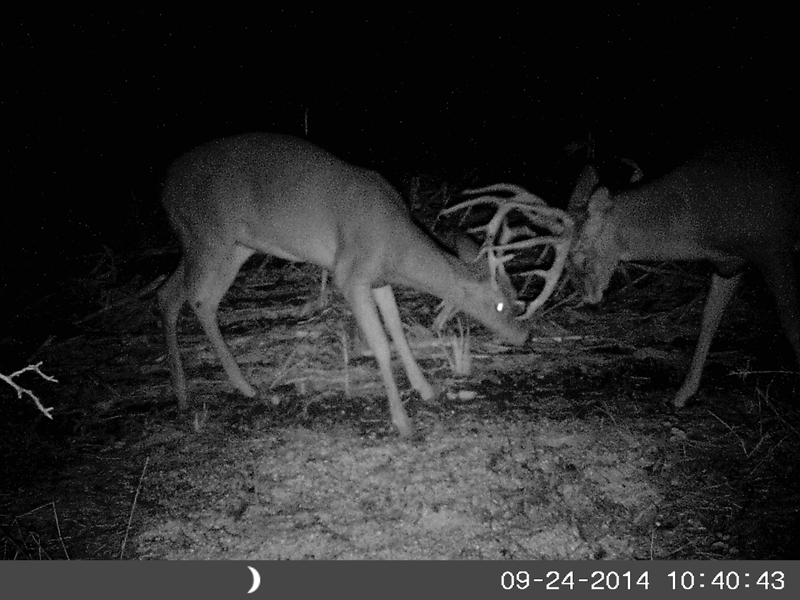 A Slow Start to Hunting, but Buck Activity Stepping Up