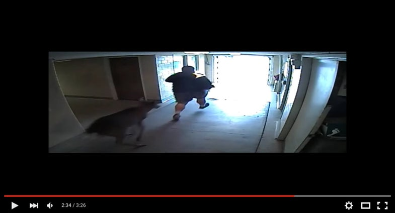 Video: Buck Busts Into Ohio College, Topples Student