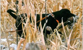 The 2003 National Hunting Survey