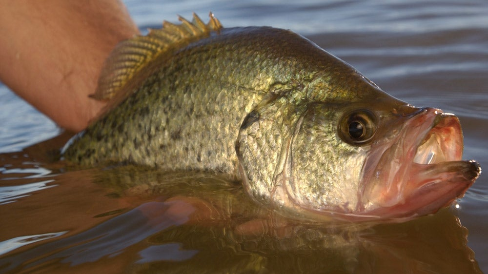 Crappie Redux: Secrets for Catching Fall Slabs