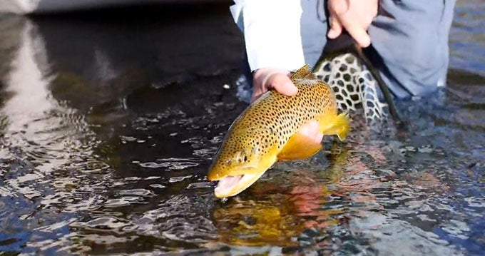 The Ins And Outs Of Fishing An Insane Spinner Fall