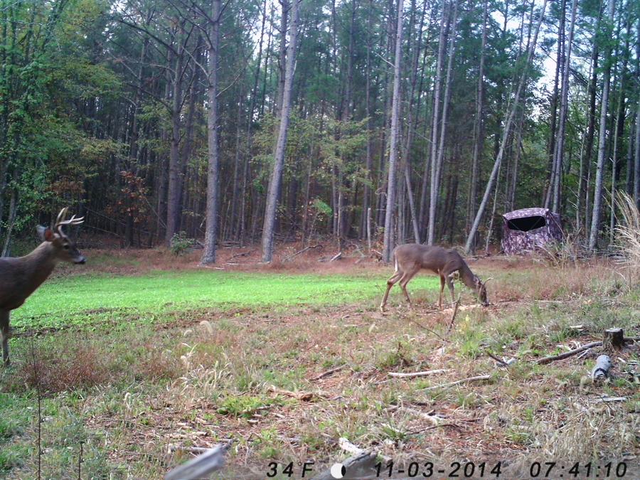 deer hunting, whitetail deer hunting