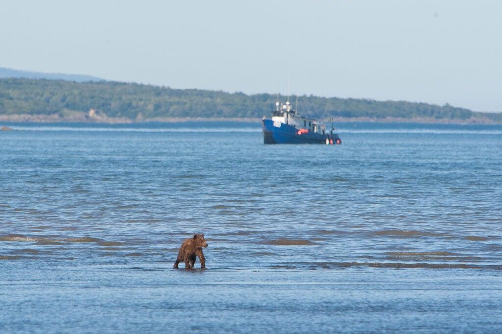 httpswww.fieldandstream.comsitesfieldandstream.comfilesimport2014importImage2011photo38356BARM_BearWars_Alaska_EXCL_020_0.jpg