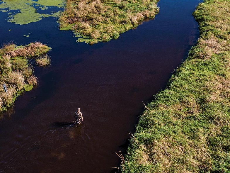 tony peterson whitetail hunting public land swamp