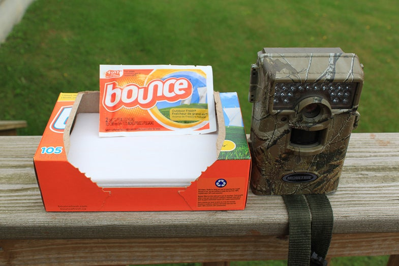 Trail Cameras, Ants, Deer Hunting, Scott Bestul