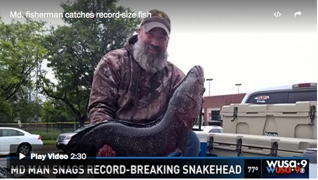 Maryland Man Arrows State-Record Snakehead