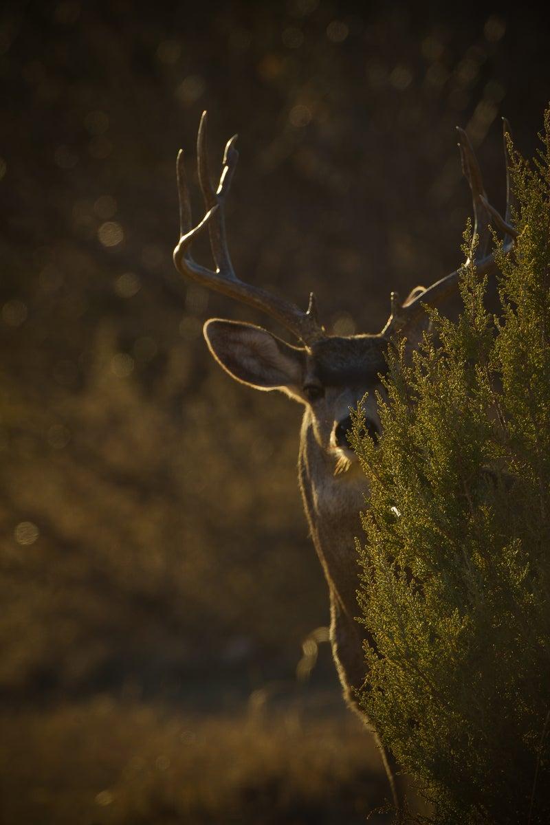 Draper: Open-Country Ghost Bucks
